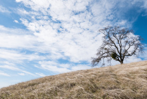 Henry Coe State Park, Morgan Hill, CA