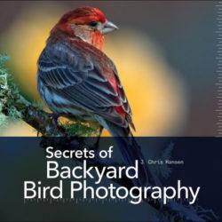 Hansen_Backyard_Birds1-408x400