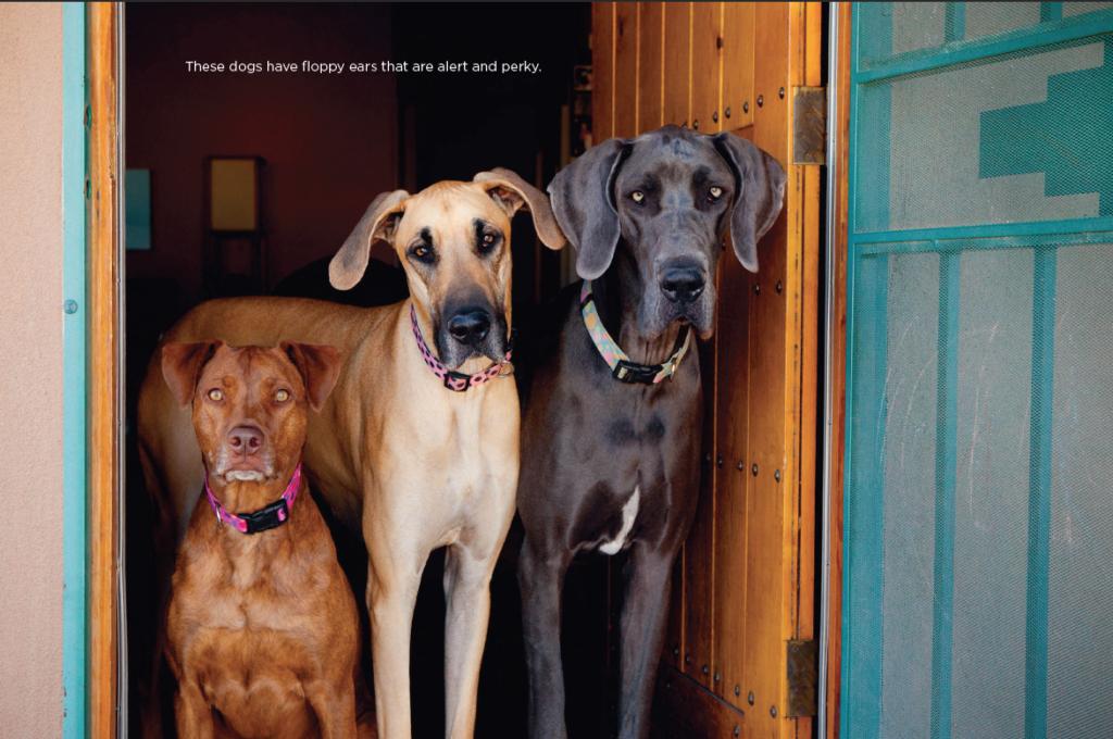 dog-behavior-pet-photography-03